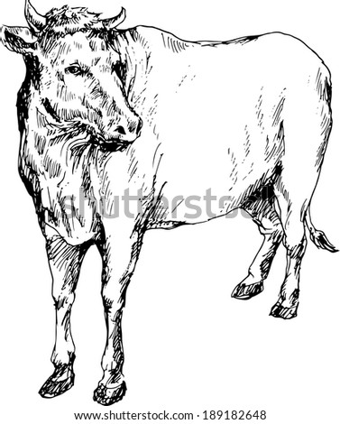 hand drawn cow - stock photo