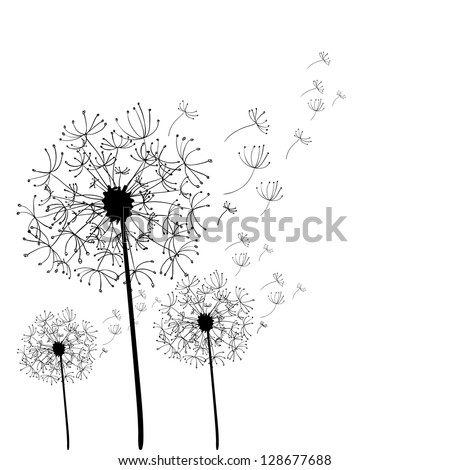 Hand drawn dandelion isolated over white background. - stock photo