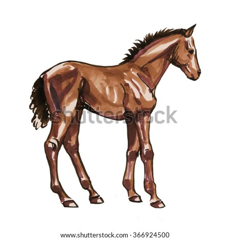 Hand drawn horse foal