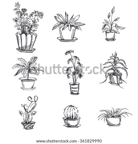 house plants drawing. hand drawn houseplants in pot set plant art graphic element floral houseplant line house plants drawing p