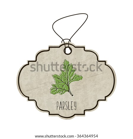Hand drawn illustration from the collection of spices and herbs. The old label in retro style with colorful fragrant parsley. illustration - stock photo