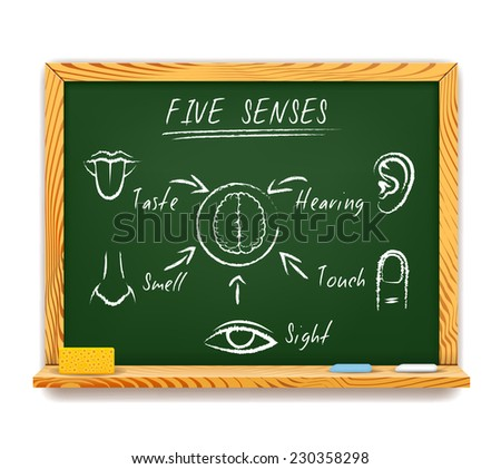 Hand-drawn infographic on a wood framed chalkboard of The Five Senses depicting  sight  touch  smell  taste and hearing with arrows pointing to a human brain - stock photo