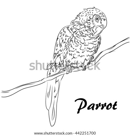 Hand drawn ink sketch  tropical bird parrot sit on a tree branch, isolated on white  Summer concept for party card, ticket, branding, logo, label. Black and white raster illustration