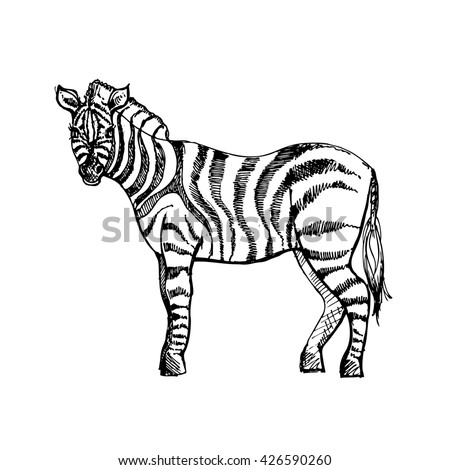 zebra vector eps 10 stock vector 199792910 - shutterstock, Birthday invitations