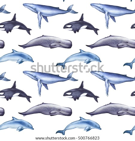 Sperm whale illustrations are not