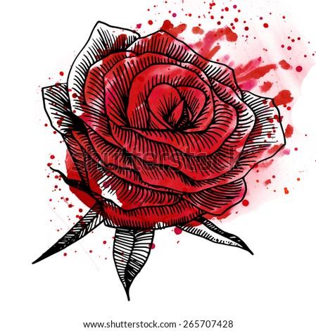 Hand drawn rose with watercolor splatter - stock photo