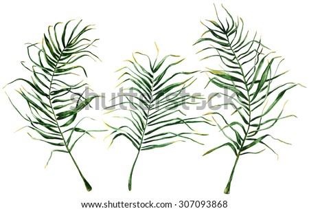 Hand drawn set of palm leaves on white background for your design.Isolated palm branches. - stock photo