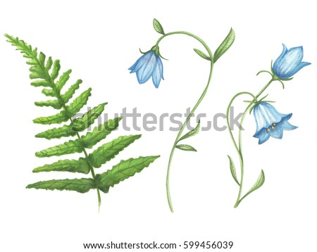stock photo hand drawn watercolor bluebell flower and fern illustration on a white background isolated