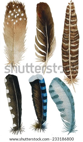 hand drawn watercolor feather set, raster illustration isolated on white  - stock photo