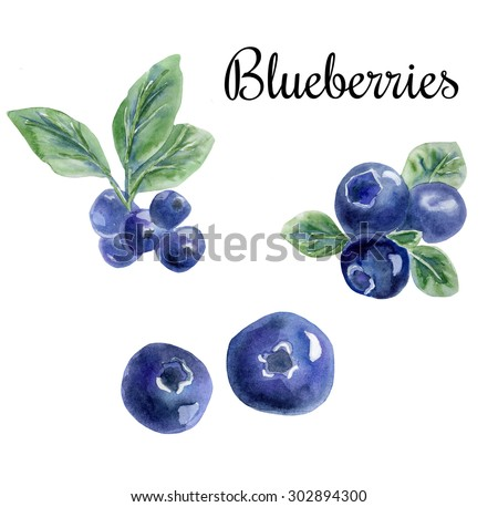 Hand drawn watercolor illustration of super food blueberry. Organic healthy food. Isolated objects on white background. - stock photo