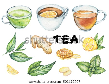Hand drawn watercolor illustration. Painted tea pictures set. Menu design, icons. Traditional drink. Ginger, lemon. mint. tea leaves, herbs, honey, green tea, black tea. Isolated on white