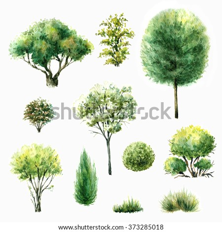Hand drawn watercolor illustration. Set of various trees and bushes. Green plants isolated on white. - stock photo
