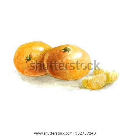 Hand drawn watercolor painting on white background, illustration of fruit orange