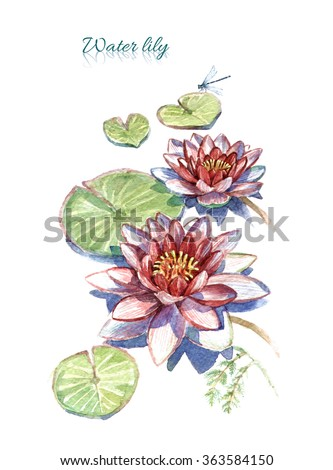 Hand drawn watercolor red water lily with text and dragonfly isolated on white background - stock photo