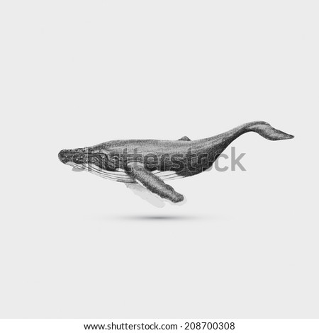 Hand drawn whale illustration background - stock photo