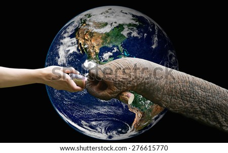 hand feeding food to elephant with the earth  ,including elements furnished by NASA - stock photo