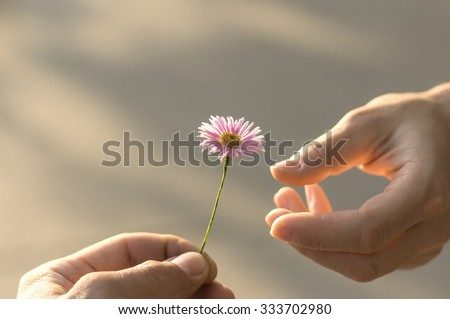 Hand gives a wild flower with love. romance, feelings