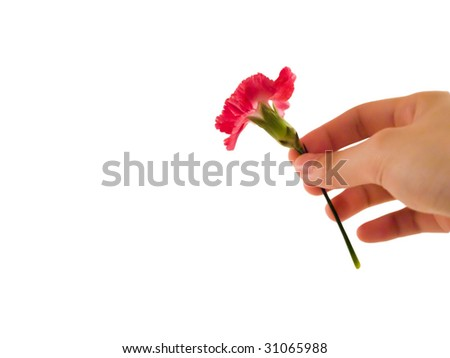 Hand giving carnation