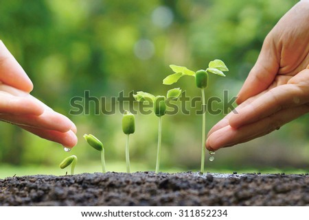 hand giving water to young baby plants seedling in germination sequence - stock photo