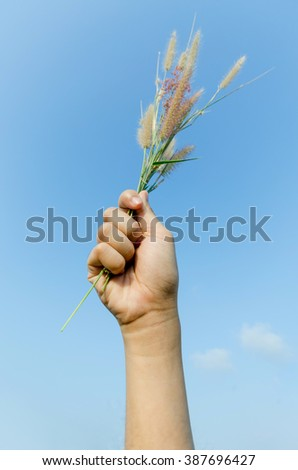 hand hold a reed grass on blue sky