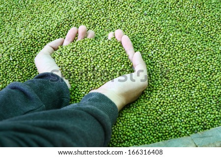 hand hold green beans - stock photo