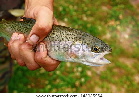Hand holding a caught trout - stock photo