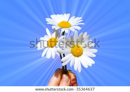 hand holding a daisy in front of the blue sky - stock photo