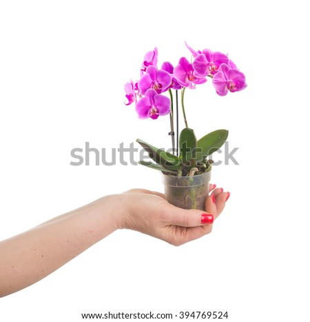Hand holding a flower pot with a mini orchid