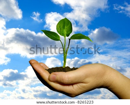 Hand holding a fresh plant - stock photo