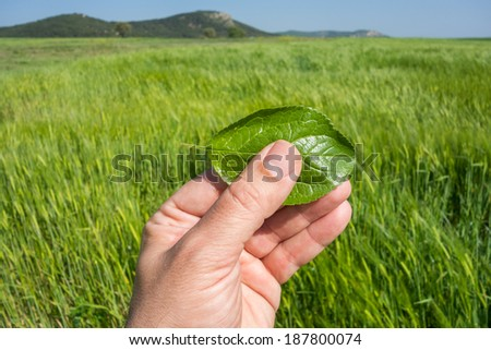 Hand holding a green leaf in nature