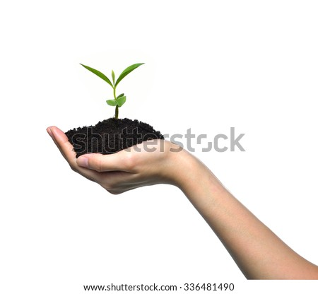 Hand holding a green young plant isolated on white background - stock photo