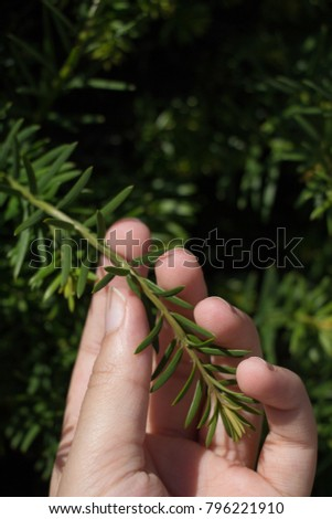 Hand holding a part of a green tree  branch