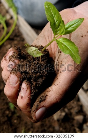 hand holding a seedling in soil - stock photo