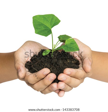 Hand holding a tree for giving life to the Earth isolated over white background - stock photo