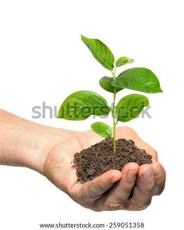Hand holding a young cucumber sapling, caring for plants - stock photo