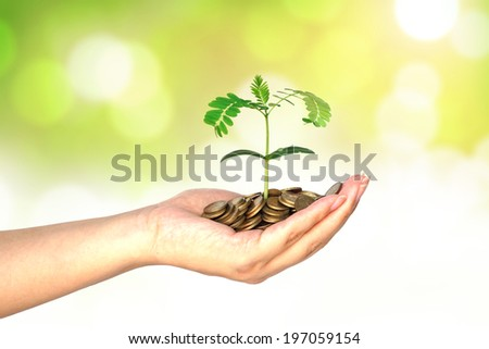 hand holding a young tree growing on coins - stock photo