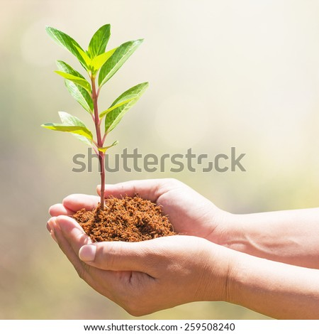 hand holding and planting new tree - stock photo