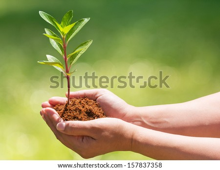 hand holding and planting new tree with nature background - stock photo
