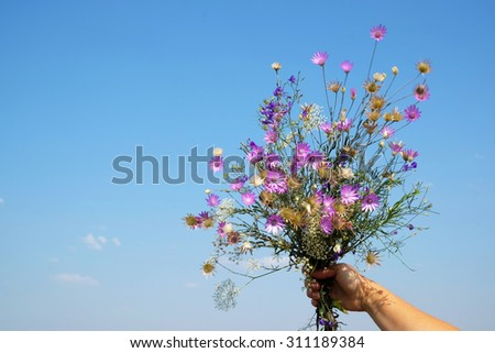 hand holding beautiful bouquet of bright wildflowers on blue background - stock photo