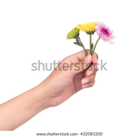 hand holding bouquet of chrysanthemum flowers  isolated on white background.
