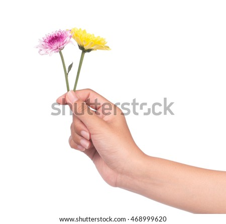hand holding bouquet of yellow and purple chrysanthemum flowers  isolated on white background.