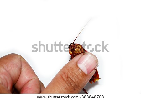 Hand holding brown cockroach over white background - stock photo