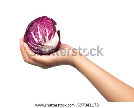 hand holding cabbage isolated on white background - stock photo