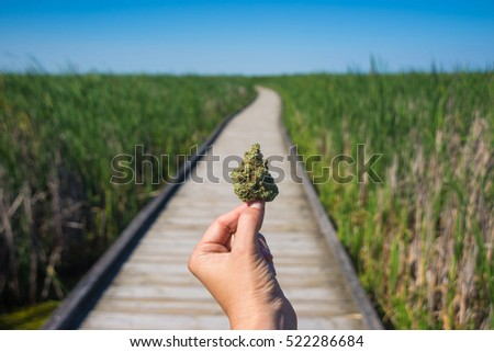 Hand holding cannabis bud agains trail and blue sky landscape - medical marijuana concept