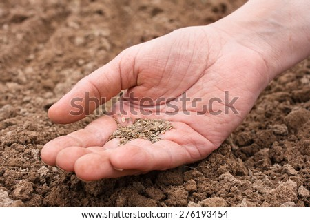 hand holding dill seeds - stock photo