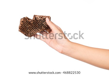hand holding dried honeycomb, beehive isolated on white background