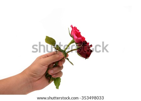 Hand holding flower isolated on white