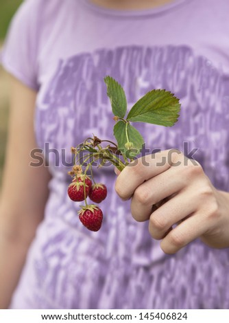Hand holding fresh strawberries. Selective focus - stock photo