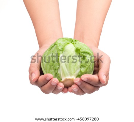 hand holding green cabbage isolated on white background