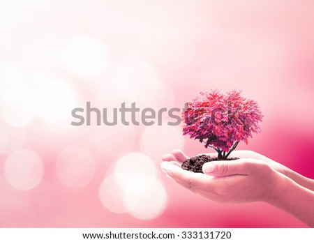 Hand Holding Grow Red Heart Tree New Year Family Organ Donation Diabetes Day Marriage Patient Gift Support Healthy Protection World Health Care Trust Arbor Charity Life Cancer Love Idea Doctor Concept - stock photo
